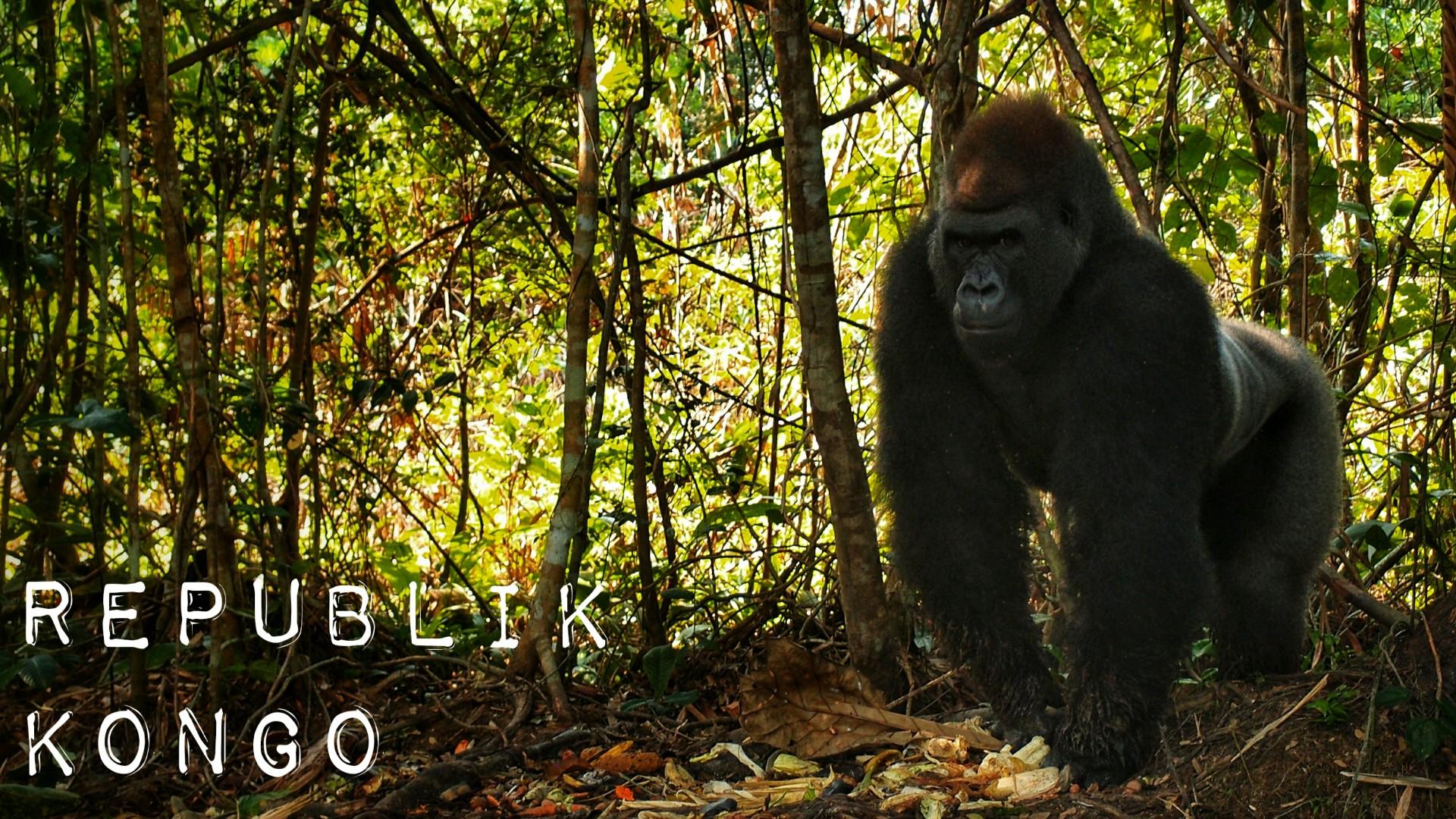 Republik Kongo – Affen gucken
